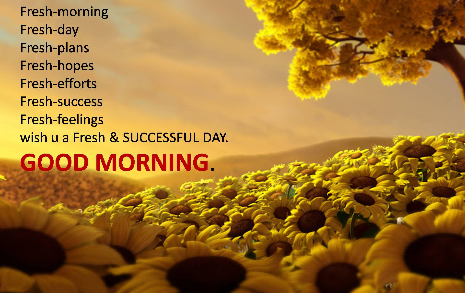 Lovely Good Morning Wallpaper Free Download Latest Cover